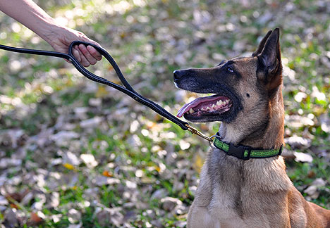 Monton Dog Walking